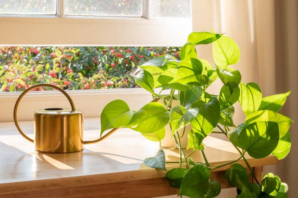How Plant Size and Pot Type Affect Soil