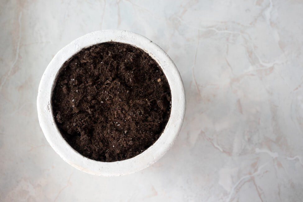 How Soil Affects Plant Health and Growth + Why It's Important to Use the Right Type