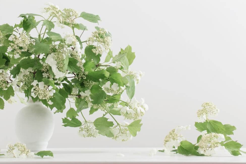 How to Care for Fresh Cut Viburnum Flowers