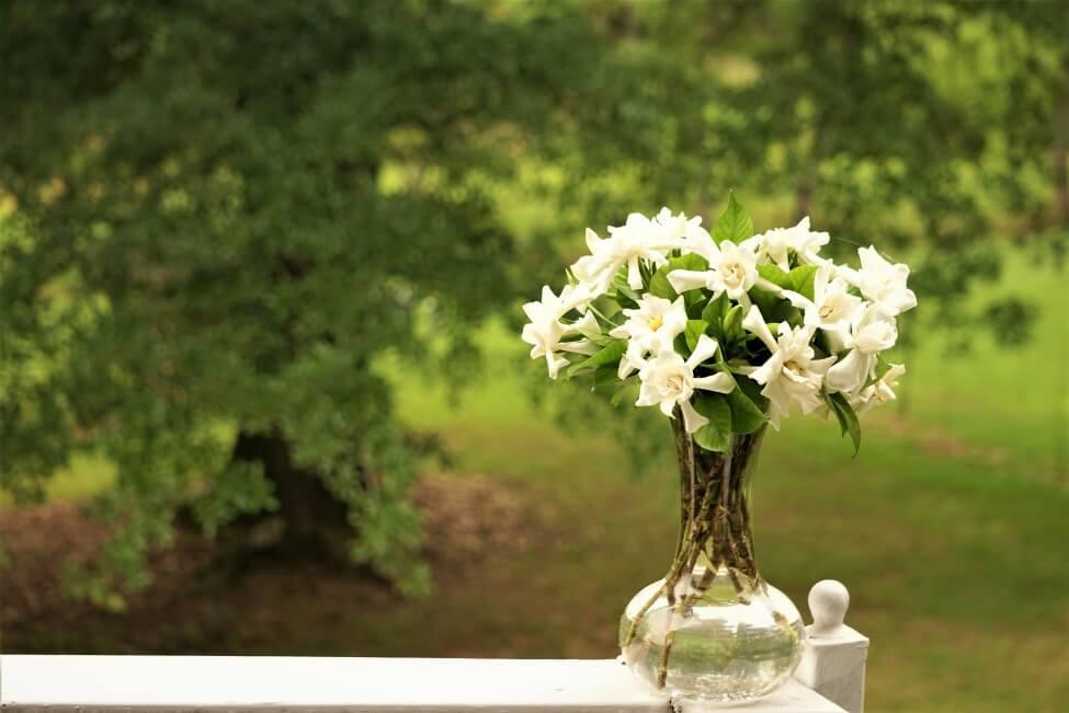 How to Care for Fresh-cut Gardenia Flowers