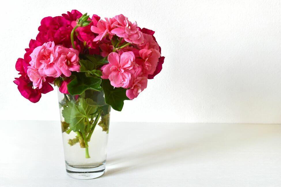 How to Care for Fresh-cut Geranium Flowers
