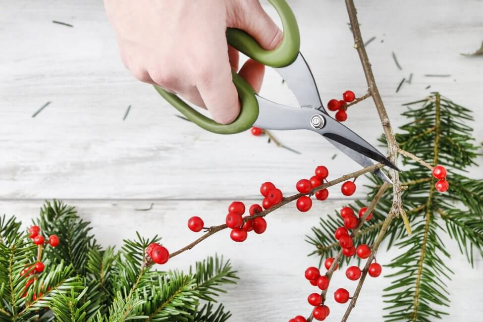 How to Care for Holly Plants at Home