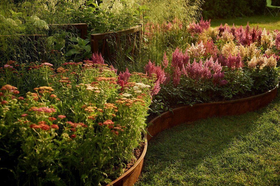 How to Grow and Care for Astilbe Flowers at Home
