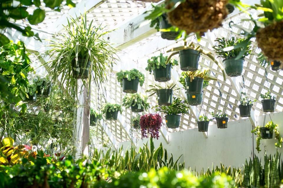 La Belle Plant Nursery in Venice, CA