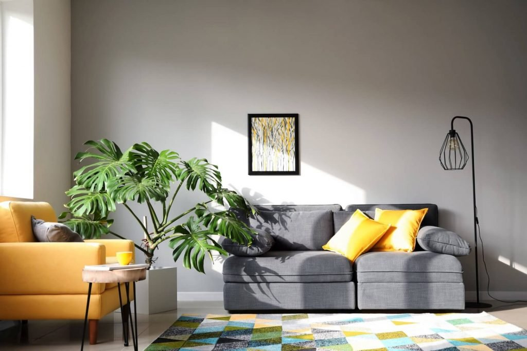 Monstera Plant Light Preferences (Essential Tips at Home)