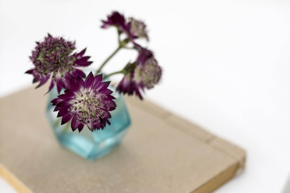Suitable Gifting Occasions for Astrantia Flowers