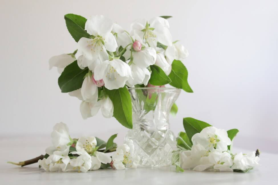 Suitable Gifting Occasions for Crabapple Blossoms