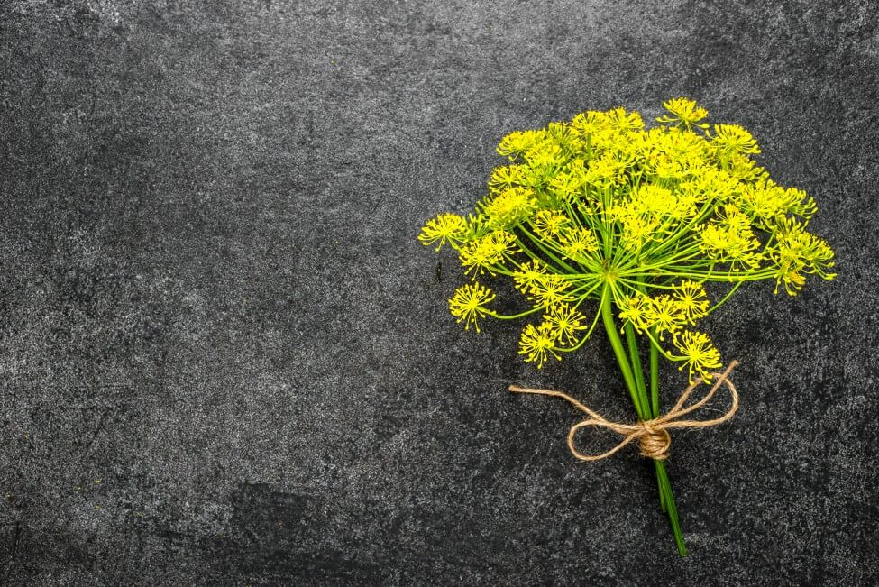 Suitable Gifting Occasions for Dill Flowers