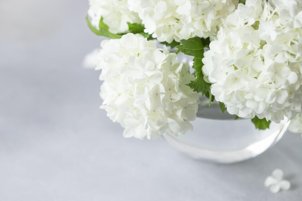 Suitable Gifting Occasions for Viburnum Flowers