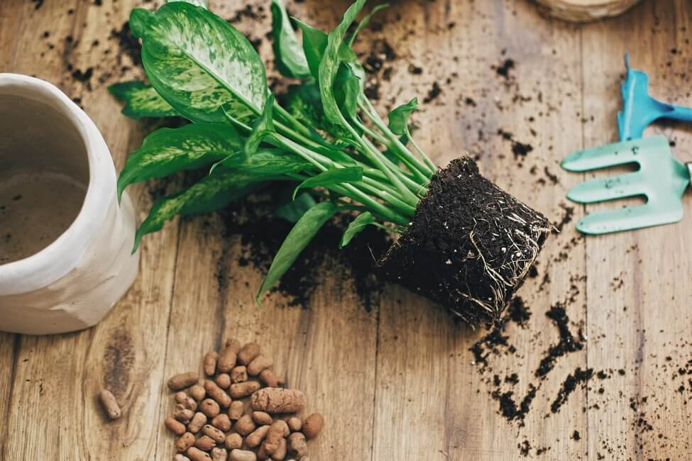 The Role of Soil in Plant Health