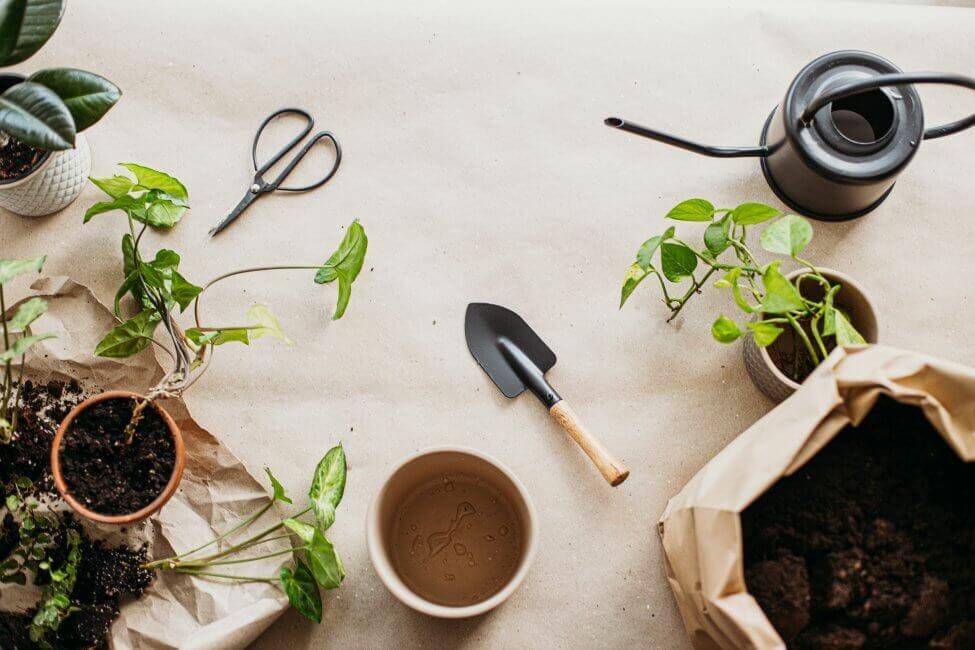 The Ultimate Pothos Plant Potting Mix Recipe