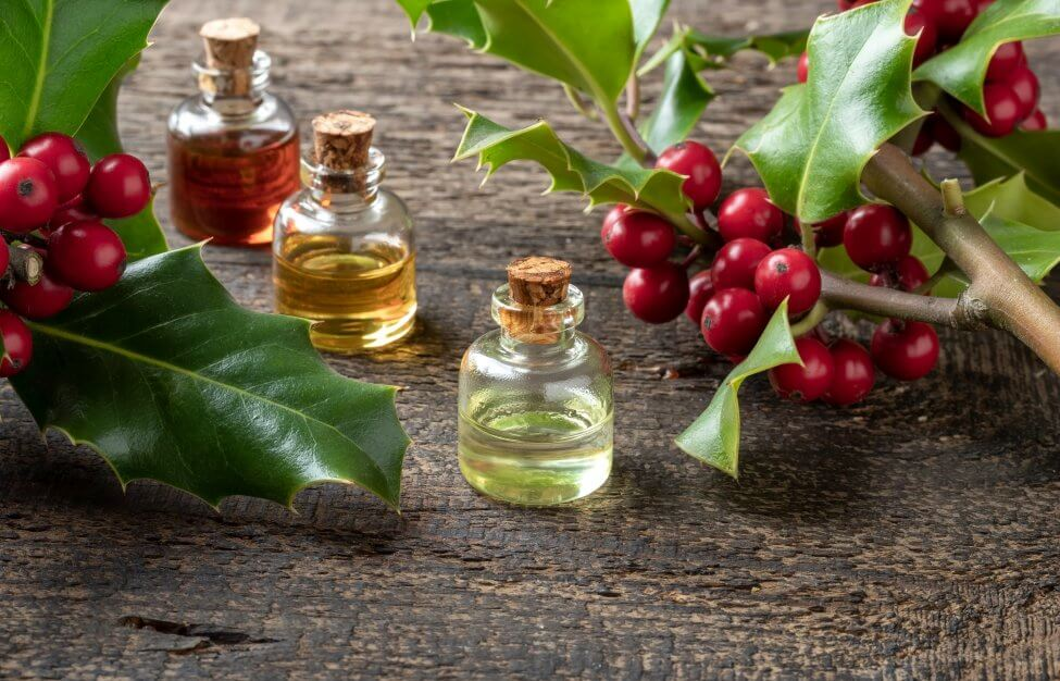 Uses and Benefits of Holly Plant