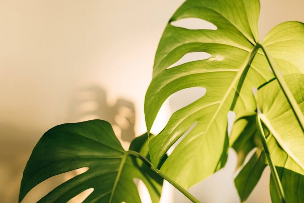Why Light is Important to Plants