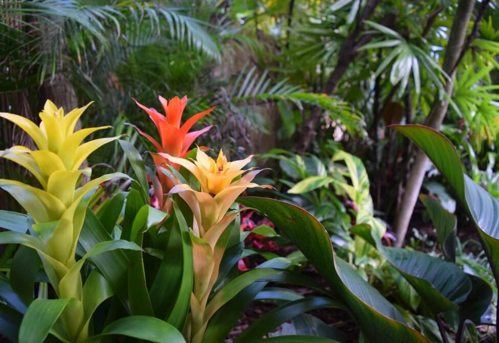 About Bromeliads