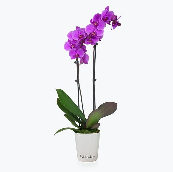 BloomsyBox-Orchids-for-Sale-in-NYC