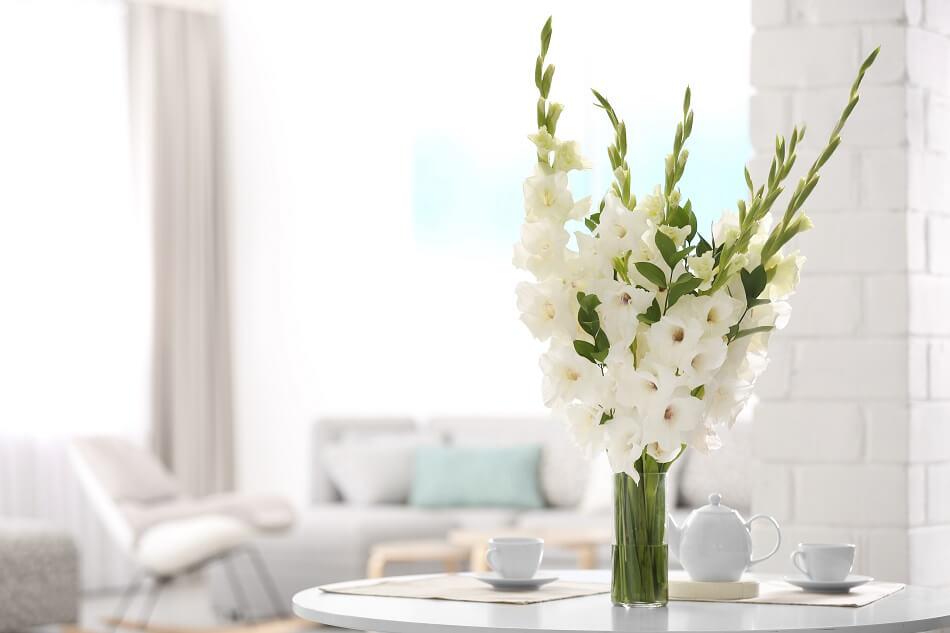 Gladiolus flower care and handling