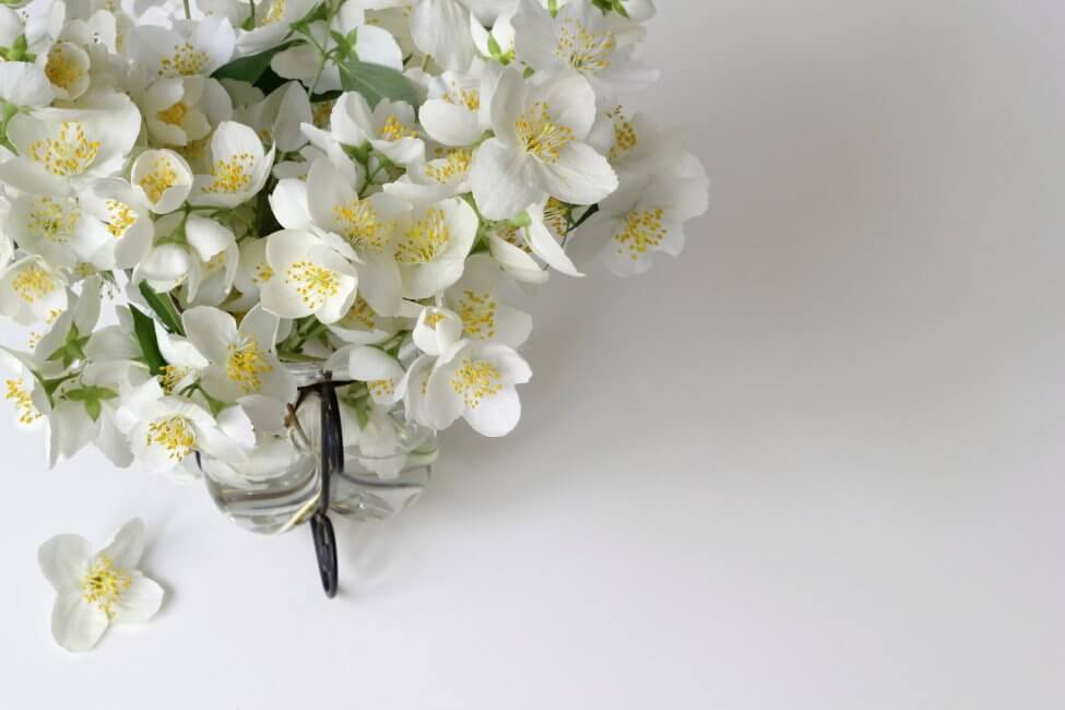 How to Care for Fresh Cut Jasmine Flowers at Home