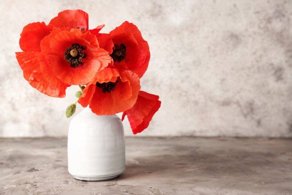 How to Care for Fresh Cut Poppy Flowers at Home
