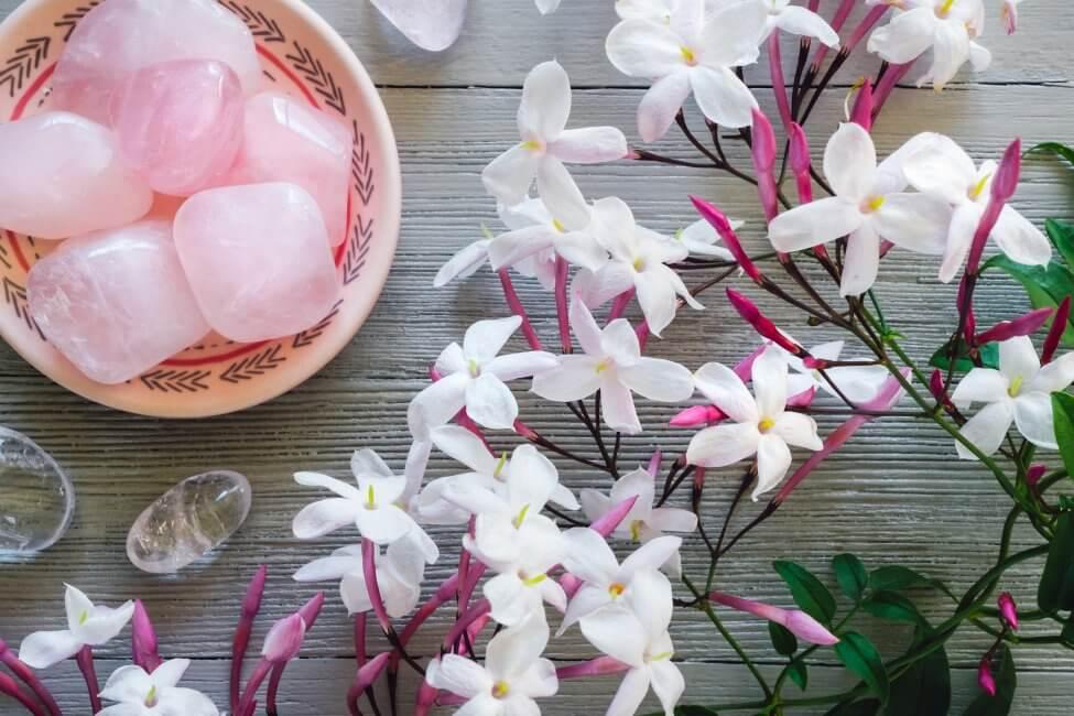 Jasmine Flower Meaning & Symbolism
