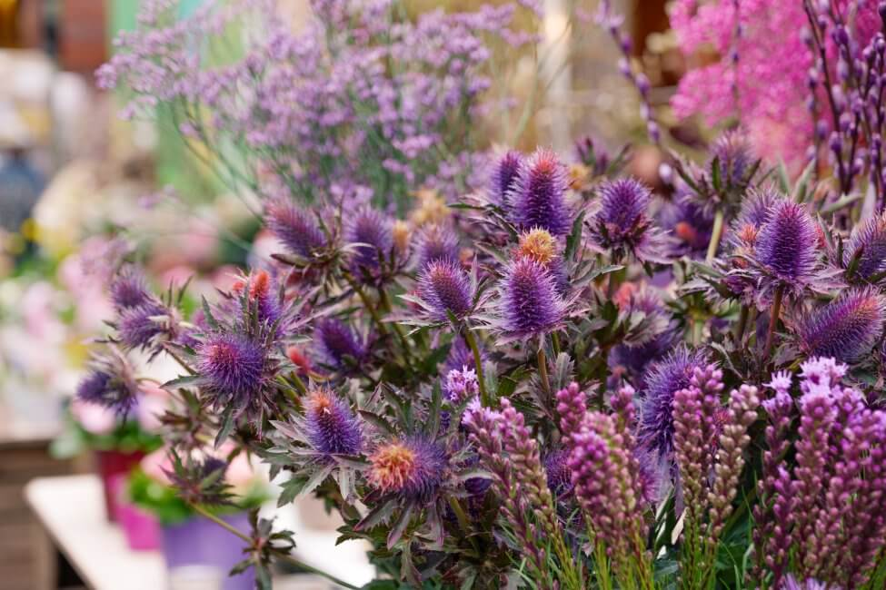 Suitable Gifting Occasions for Hyssop