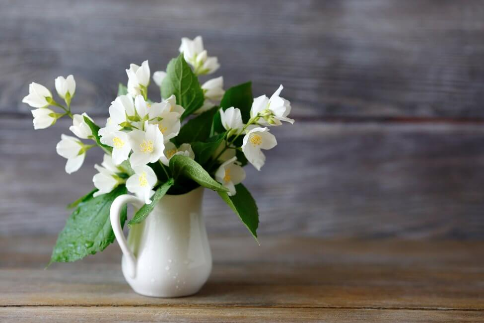 Suitable Gifting Occasions for Jasmine Flowers