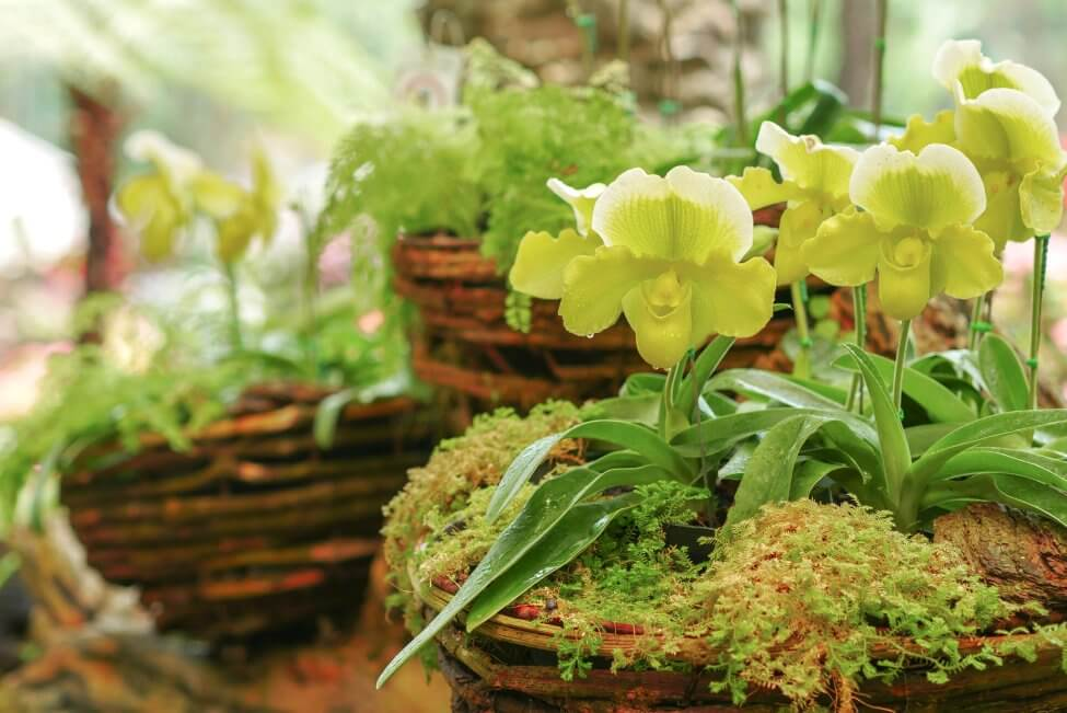 Suitable Gifting Occasions for Lady's Slipper Orchids