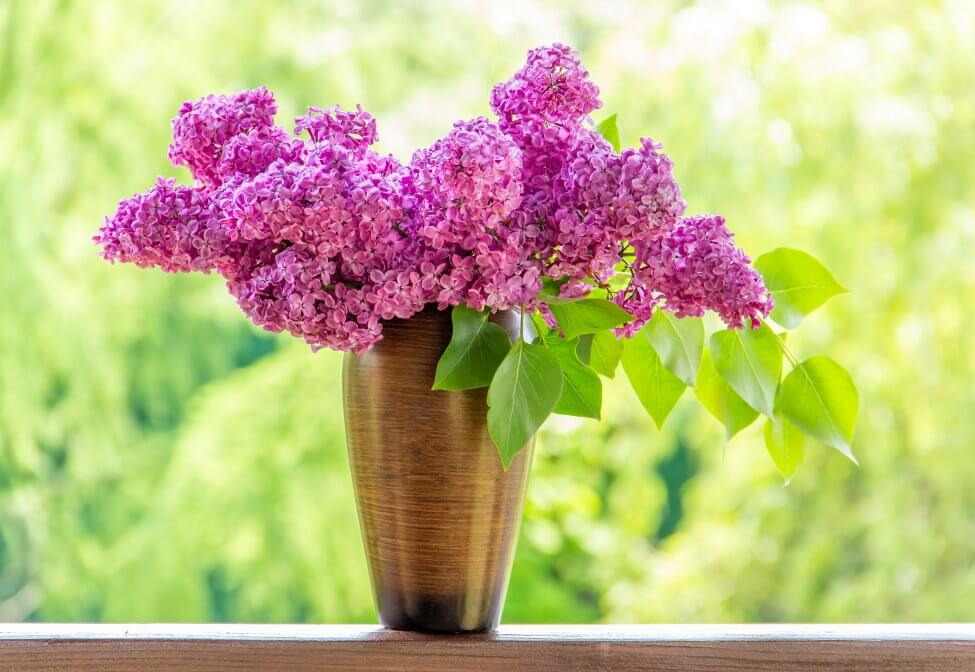 Suitable Gifting Occasions for Lilac Flowers