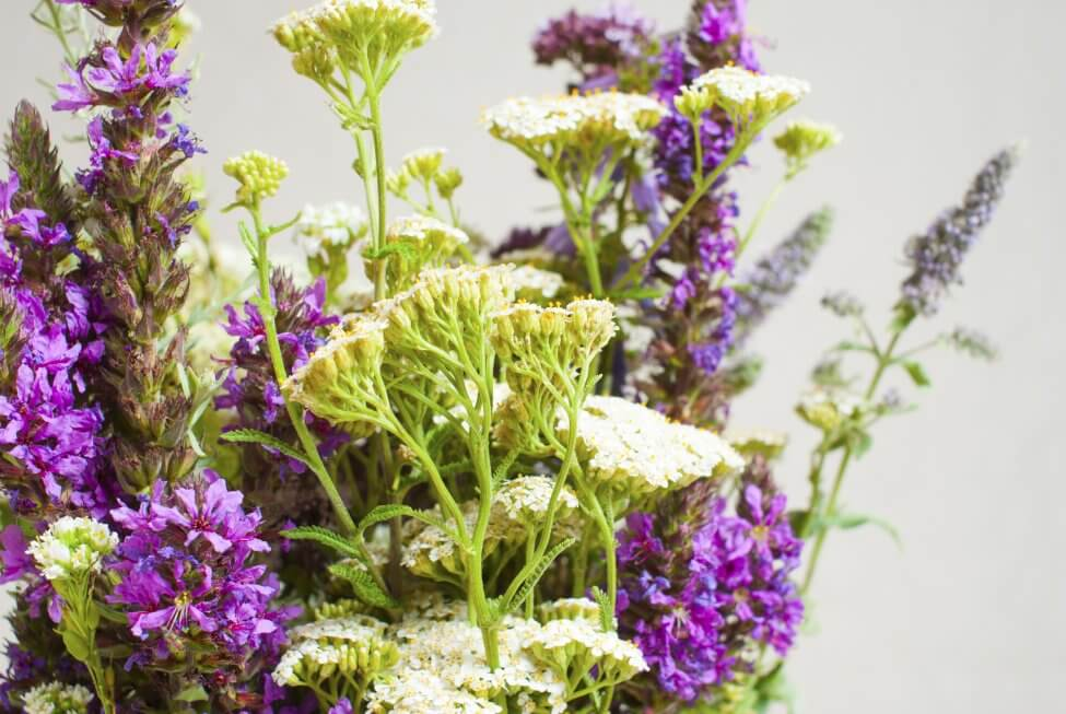 Suitable Gifting Occasions for Marjoram Plants / Flowers