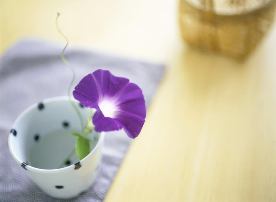 Suitable Gifting Occasions for Morning Glory