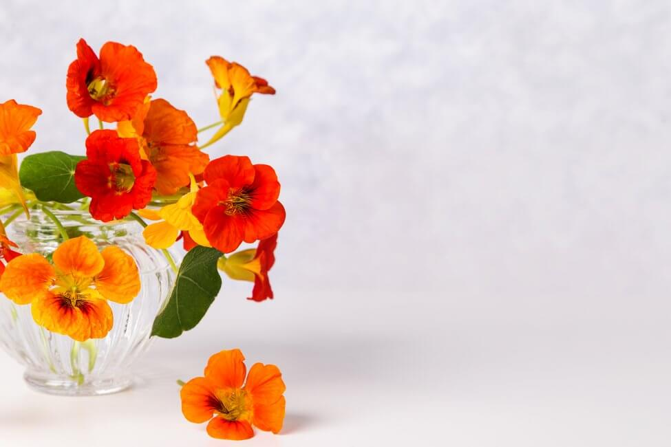 Suitable Gifting Occasions for Nasturtium