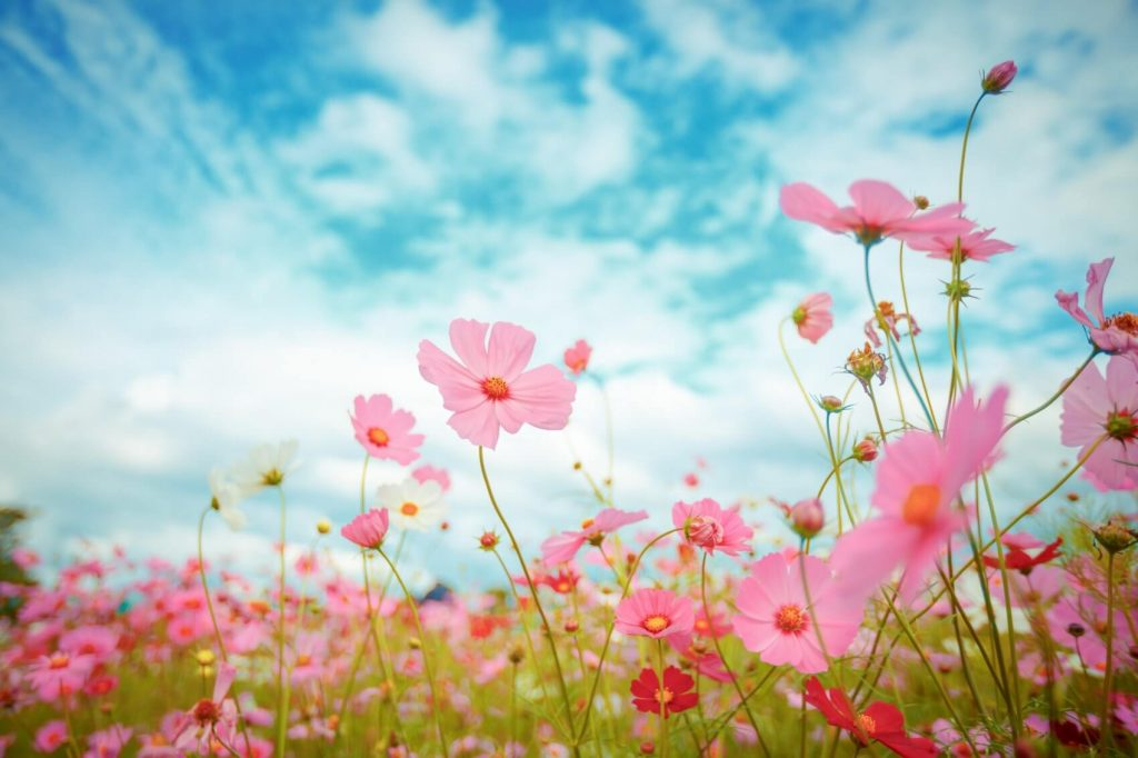 The 100 Most Popular Types of Pink Flowers