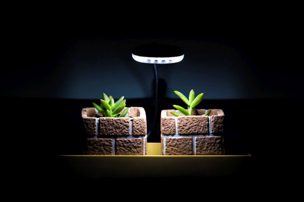 Tips on Using Artificial Lights for Houseplants at Home