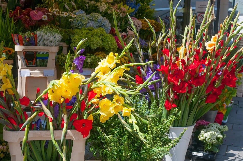 Tips to Consider when buying gladiolus flowers