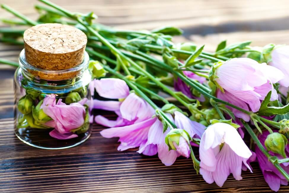 Uses and Benefits of Hollyhocks