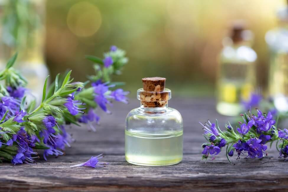 Uses and Benefits of Hyssop Flowers