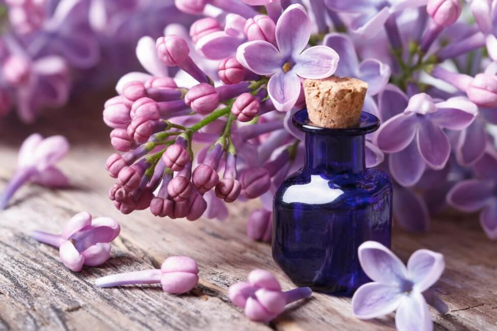 Uses and Benefits of Lilac Flowers