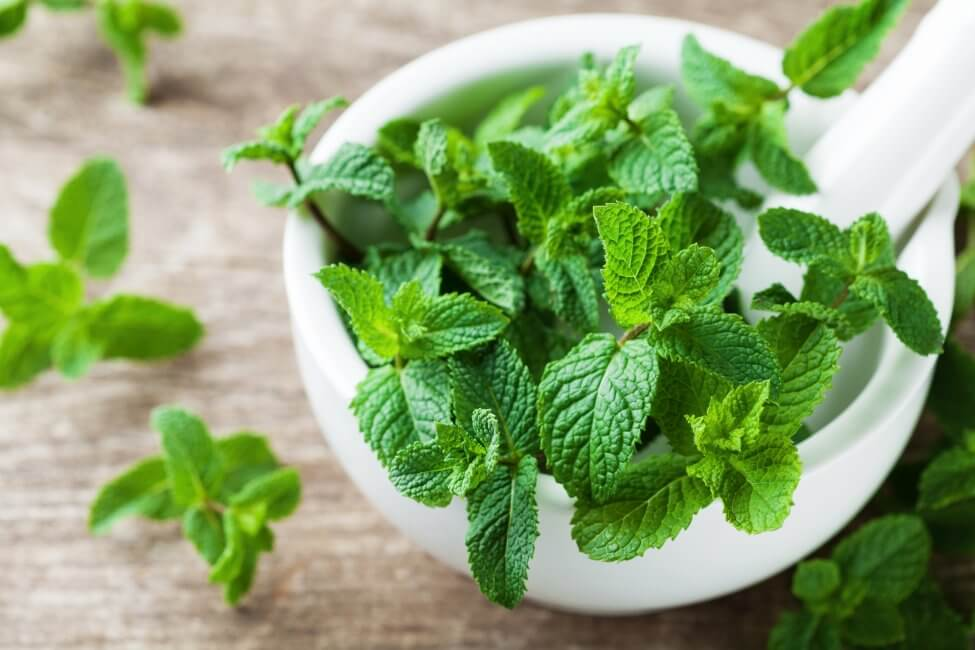 Uses and Benefits of Mint Plants