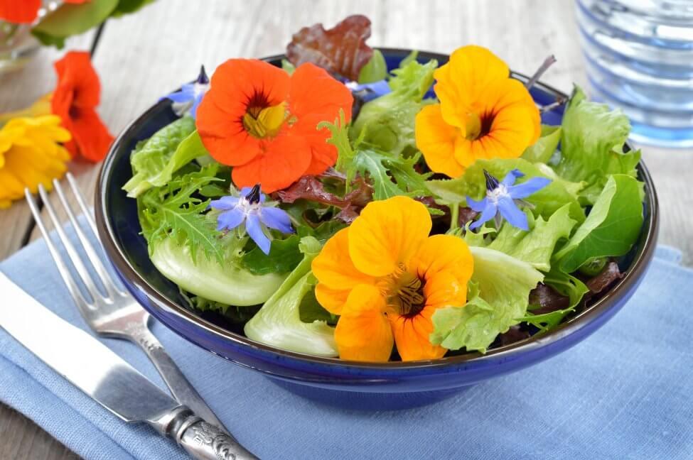 Uses and Benefits of Nasturtium