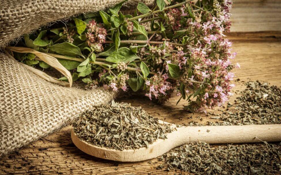Uses and Benefits of Oregano Plants