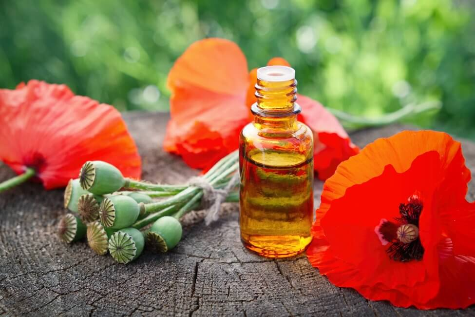 Uses and Benefits of Poppy Flowers