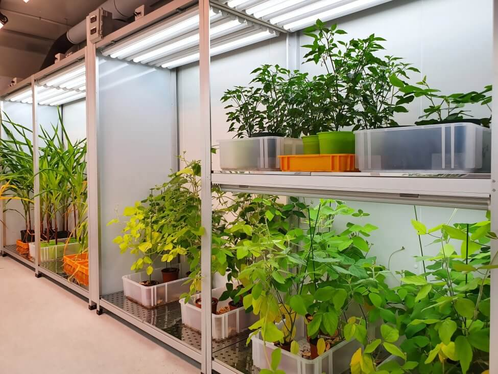 What Types of Plants are Conducive to Artificial Lights