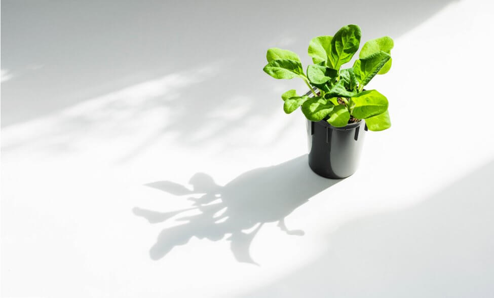 Why Plants Need Light to Grow