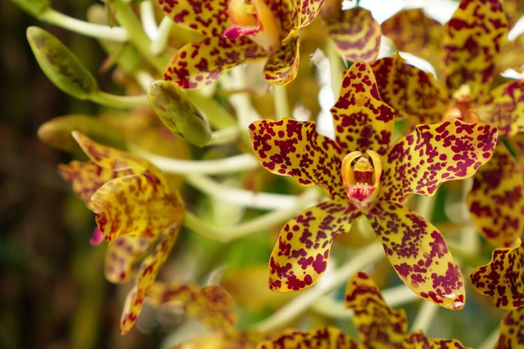 Most Popular Types of Orchid Plants