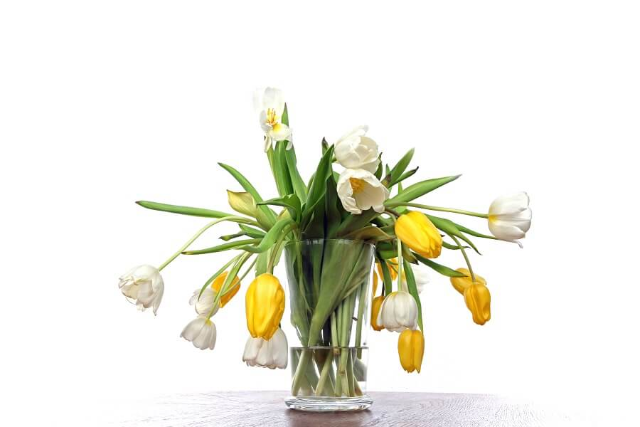 6 Essential Things to Avoid With Fresh Cut Flowers