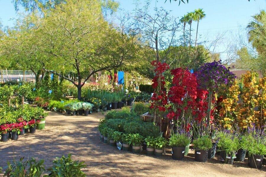 Berridge Nurseries in Phoenix, Arizona