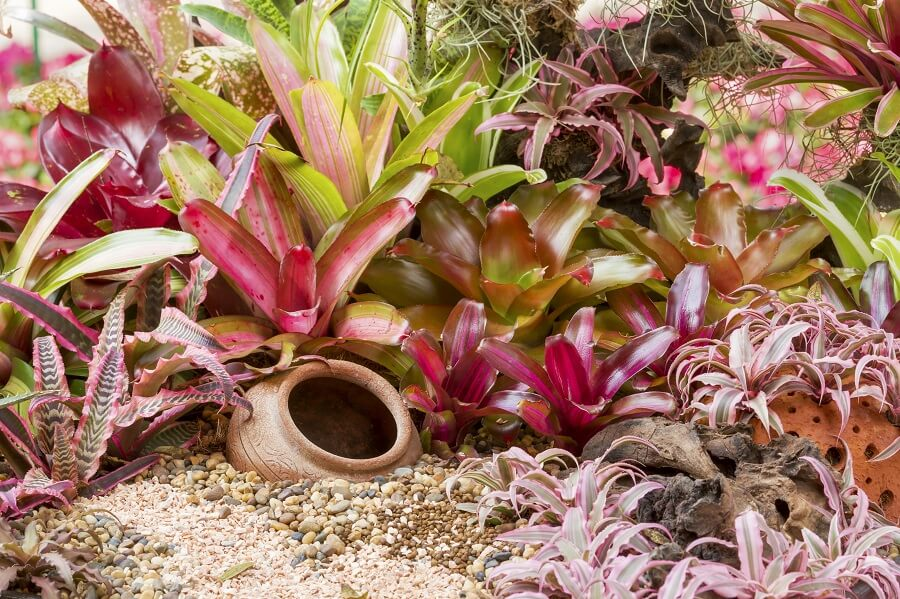 Do All Bromeliad Plants Need Fertilizing