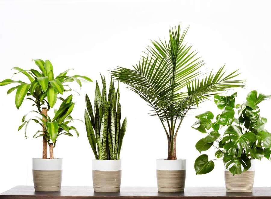 Plants.com Plant Delivery in Phoenix, Arizona