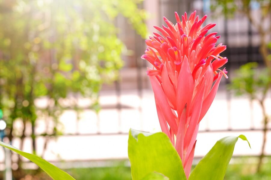 Signs Your Bromeliad Plant Is Receiving Too Much Light