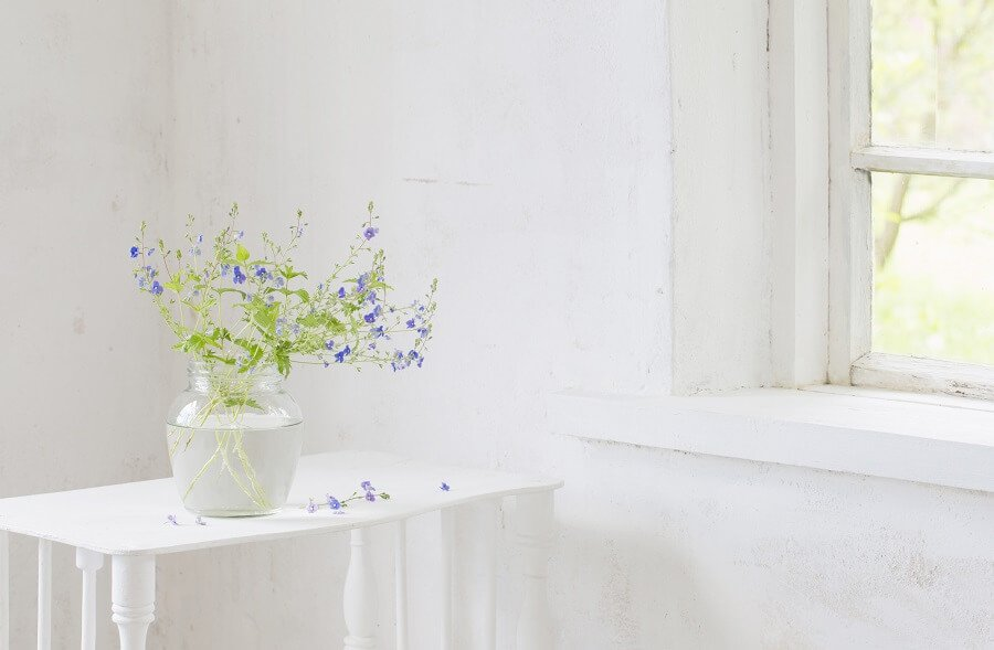 Suitable Gifting Occasions for Speedwell Veronica Flowers