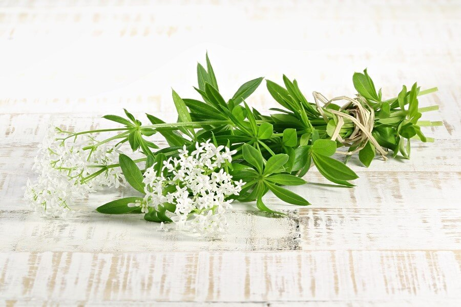 Suitable Gifting Occasions for Sweet Woodruff Flowers